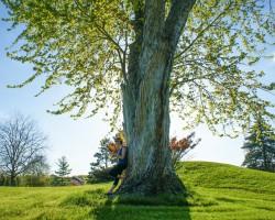 Wycinka drzew i krzewów – kiedy potrzebne zezwolenie?