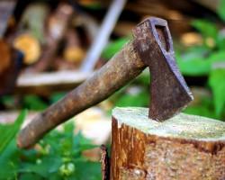 Zezwolenie na wycinkę drzew nie będzie już konieczne?