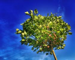 Najnowsze przepisy dotyczące usuwania drzew już obowiązują!